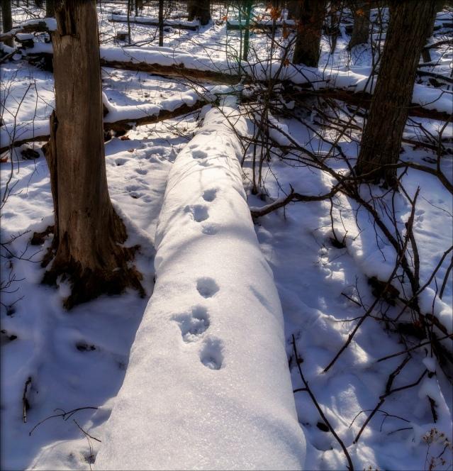 Western New York woodland snow scene